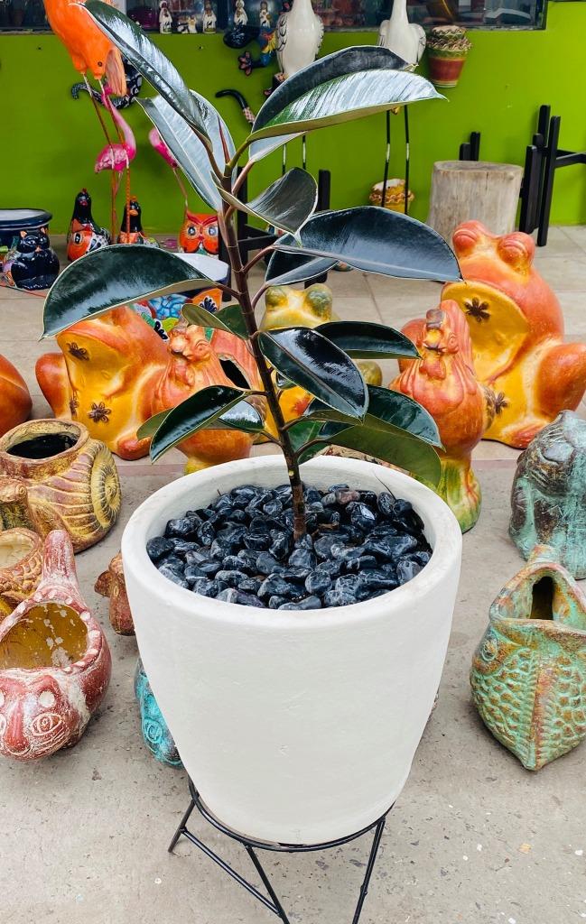 plantas-vivero-centro-jardineria-1